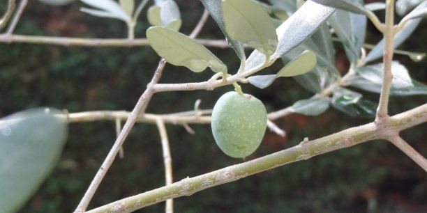 olivier-drome