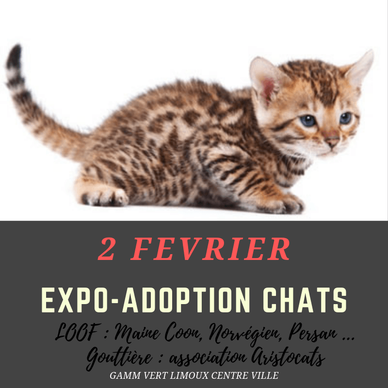 EXPO-ADOPTION CHATS